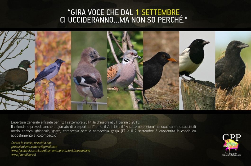 Calendario Veneto.Calendario Venatorio Veneto 2014 2015 Anche Quest Anno
